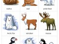 Arctic-Animals