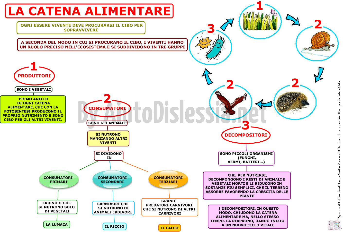 La Catena Alimentare Lessons Tes Teach